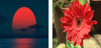 A example of semantic gap problem: computers cannot distinguish a red flower from rising sun in terms of colour and texture